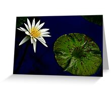 White Water Lily with Leaf Greeting Card