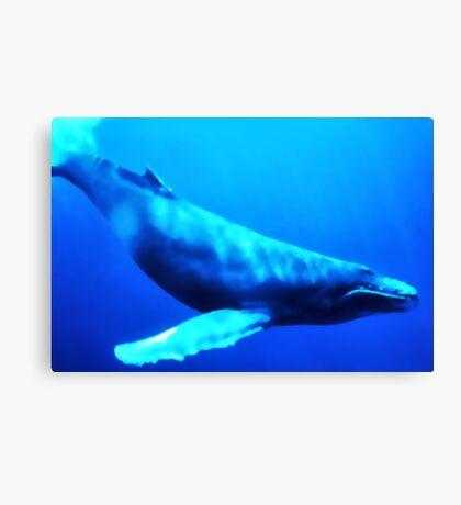 Swimming free Canvas Print