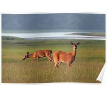Deer in Overton Meadow Poster