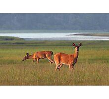 Deer in Overton Meadow Photographic Print