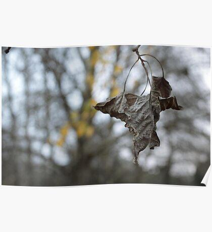 Crinkled Leaf Poster