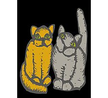 Cats couple - pets, cats, kittens, rescue,  Photographic Print