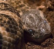 Snake shed cycle by Maria Tzamtzi