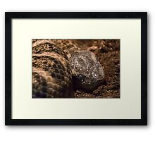Snake shed cycle Framed Print