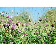 Meadow of grasses and clover Photographic Print