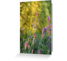 Sunset Lavender Greeting Card