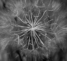 Wind Blown by BrianaRose