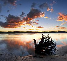 Uprooted - Lake Illawarra Sunset by Stephen  Jarrett