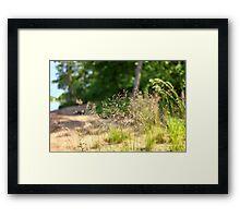 field herb    Framed Print