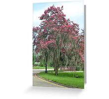 A Moss Covered Crepe Myrtle Greeting Card