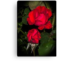 Rose in the night Canvas Print
