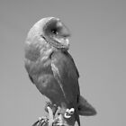 Barn Owl by MarkElsworthPic
