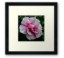 Unique Petunia Framed Print