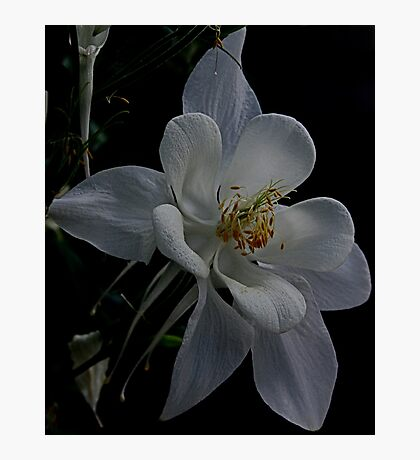 White Star Photographic Print