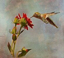 Hummingbird Feeding in Flight by Angela Stanton