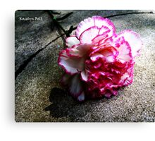 Pink Carnation No. 1# Canvas Print