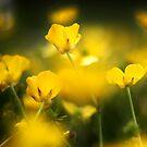 Buttercups by Jordan Moffat