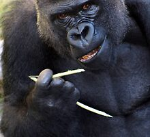 Chop-sticks are not for everyone by Inga McCullough