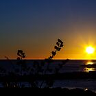 Another Boat Harbour Sunrise by Kim Ogden