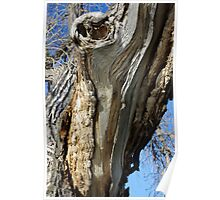 Barkless Cottonwood Branch Poster