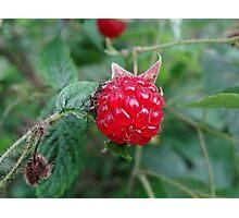 red rasberry Photographic Print