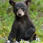 Baby Black Bear by Luann wilslef