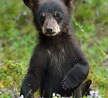 Baby Black Bear by Luann wilslef