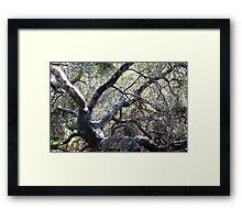 Landscape With Gnarled Tree Framed Print