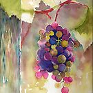 Grapes by Tania Richard