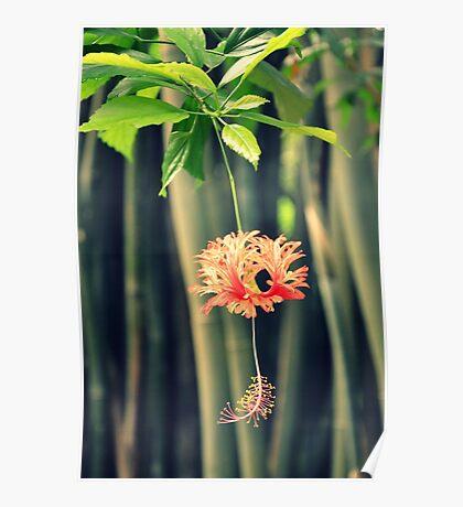 Jungle Beauty Poster