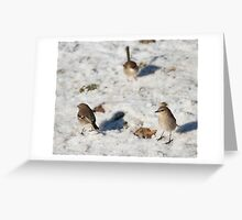 Robins and wrens fossicking in the snow  Greeting Card