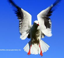 seagull mid flight by daisy-lee
