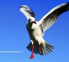Seagull minus leg by daisy-lee