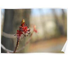 spring emerge Poster
