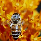Working Bee by Keala