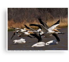 Pelican's taking flight 2013 Canvas Print