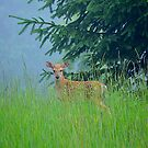 Fawn in the Grass by Debbie  Maglothin