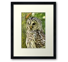 Majestic Denizen of the Forest Framed Print