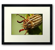A Face From Another World Framed Print