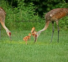 A Beautiful Family ~ by Renee Blake