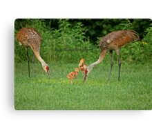 A Beautiful Family ~ Canvas Print