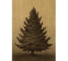 Lonely Pine  Photographic Print