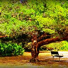 Shade Tree With Bench by AuntDot
