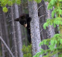 Baby bear in Tree by Luann wilslef