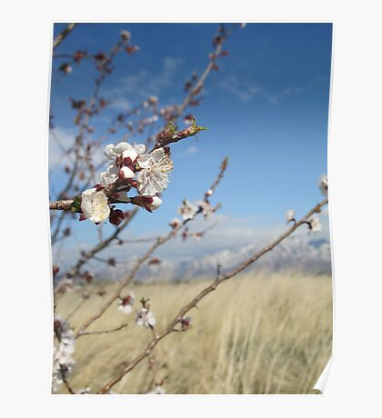Cherry Blossoms & Mountains Poster
