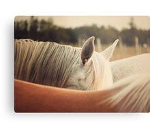 Quarter Horse Ears Metal Print