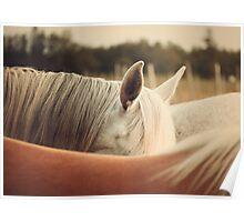 Quarter Horse Ears Poster
