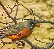 Robin by JoeGoble