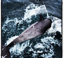 Playing with Dolphins by photosbyamy