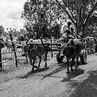 Cambodia:  Transport by Bovine by Karen Willshaw